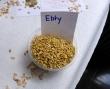 Getreidewoche in der Mensa