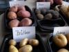 Kartoffelwoche in der Mensa